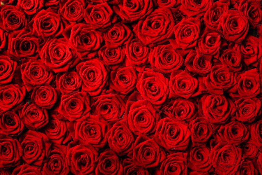 Grubb%E2%80%99s+Life+Skills+Class+Spread+Valentine+Love