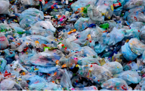 Sophomores Speak Out: Plastic Pollution